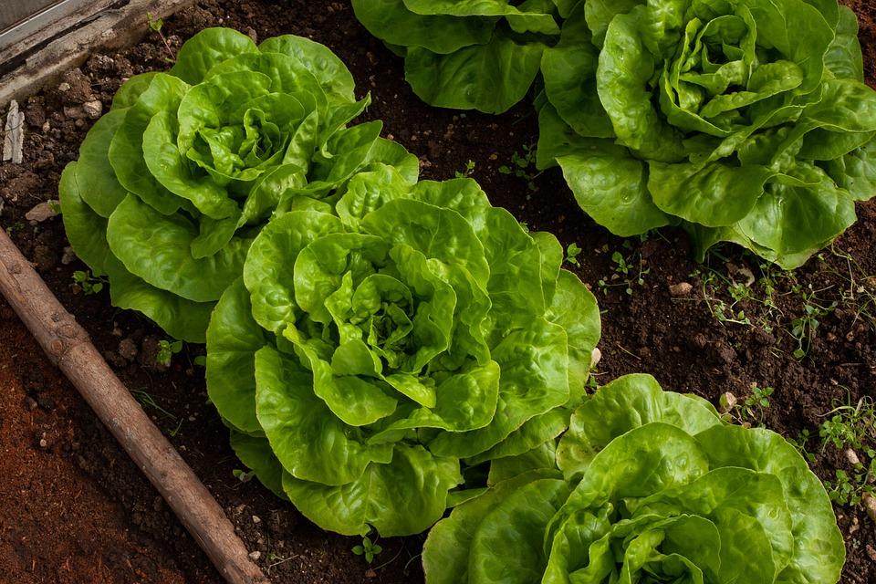 insalata verde brucia grassi